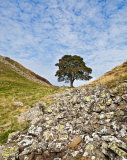 Sycamore Gap  Northumbria