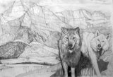 Wolves in Montana (A2) (private collection: Scotland)