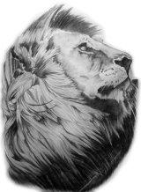 Lion portrait (A2)