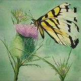 Butterfly, Faded