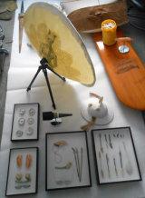 satelite and quills