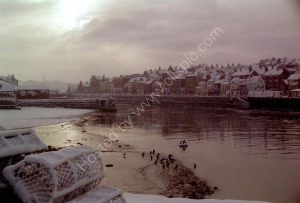 Crabpots and Cormorants