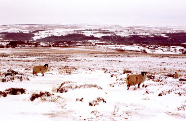 Winter on the North York Moors