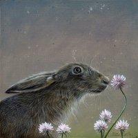 Hare amongst the clover