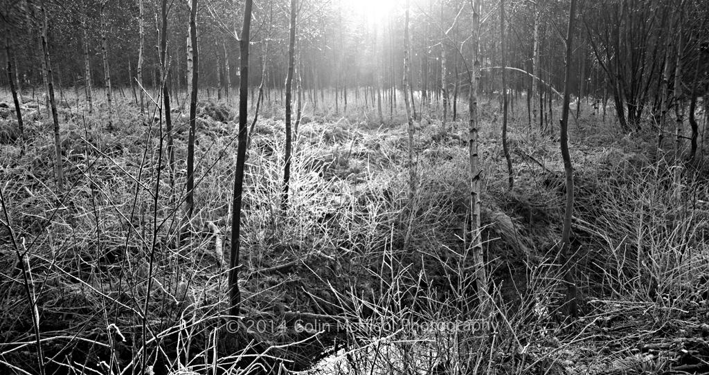Winter sunlight b&w