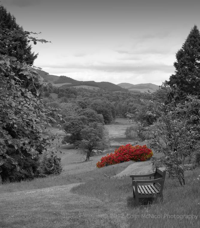 Rhododendrons, Dawyck Botanic Gardens