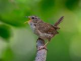 Cottage Birds