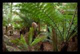 Boston tree fern's aplenty