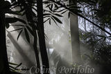 Sunlight throught the mist