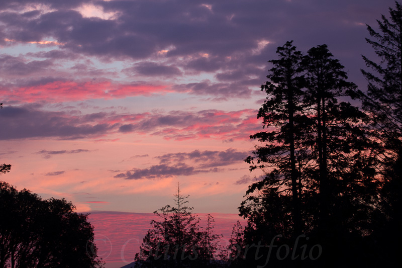 Morning sky over the trees
