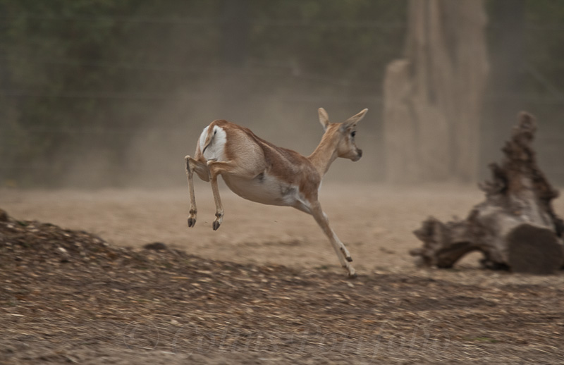 ...and the running of the deer...