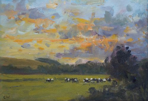 'Cows near Dorchester, evening light' Oil on Paper 11x16cm