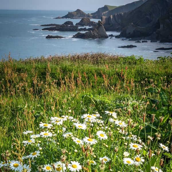 North Devon Cliffs