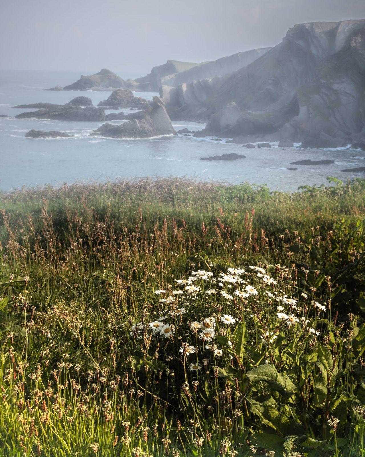 Misty Cliffs north Devon