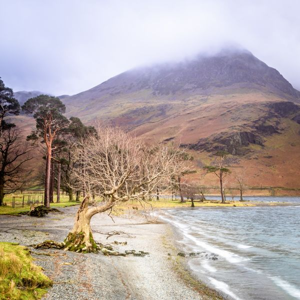 Tree Beside the Lake, Buttermere