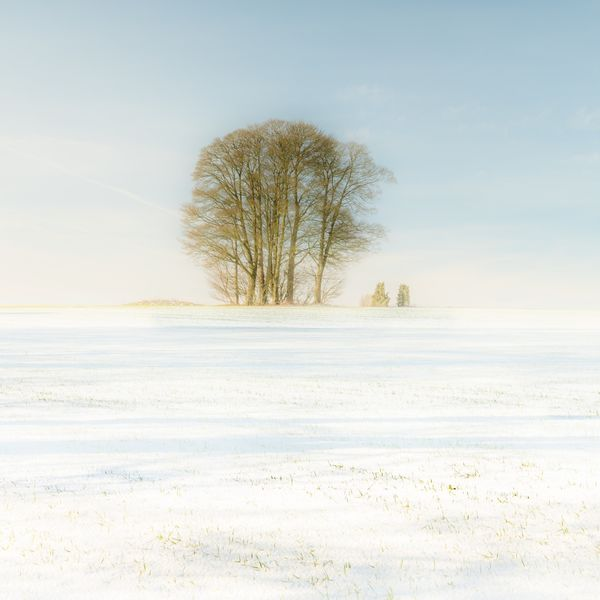 The Trees in Winter Cotswolds
