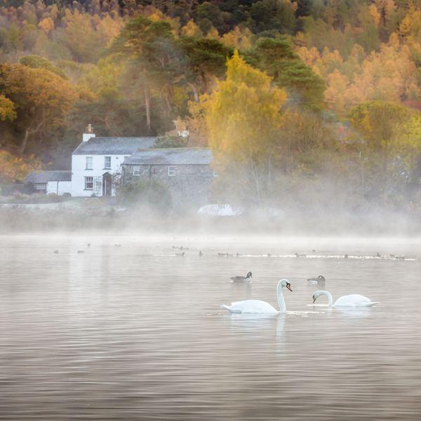 Autumn Mist Derwent Water Swans