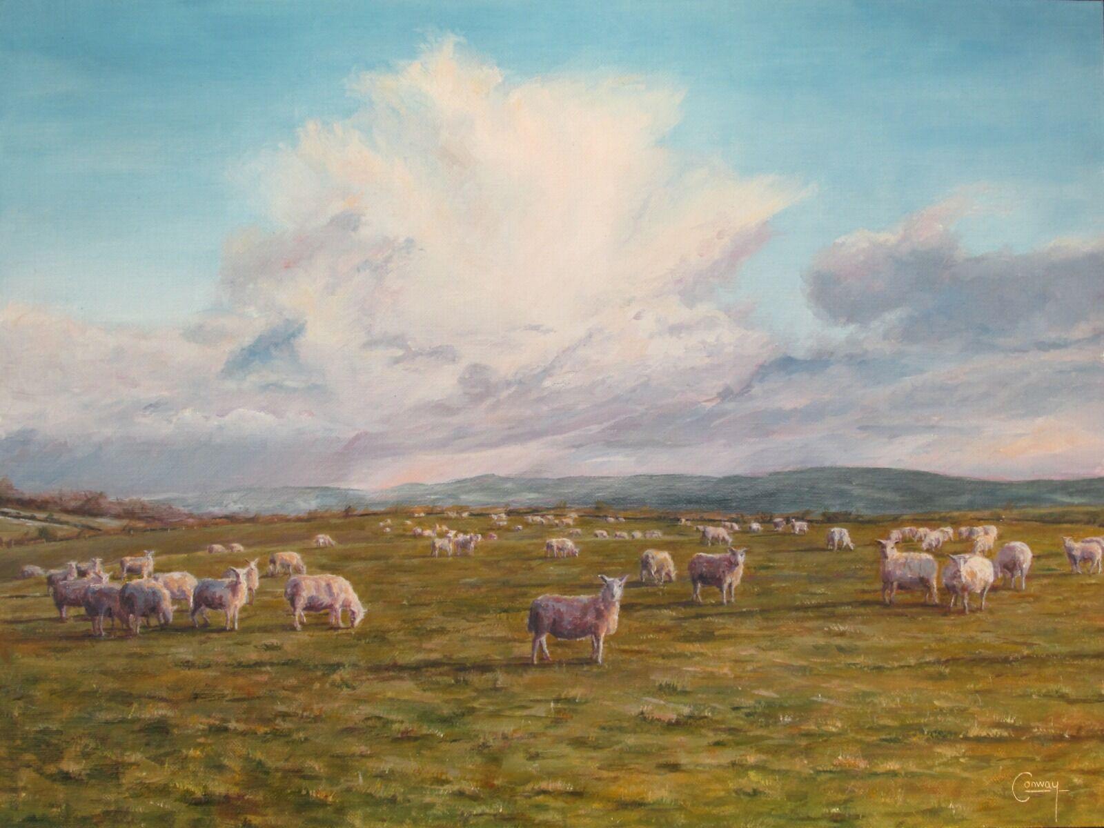 Surprised Sheep, Llansawel, Carmarthenshire