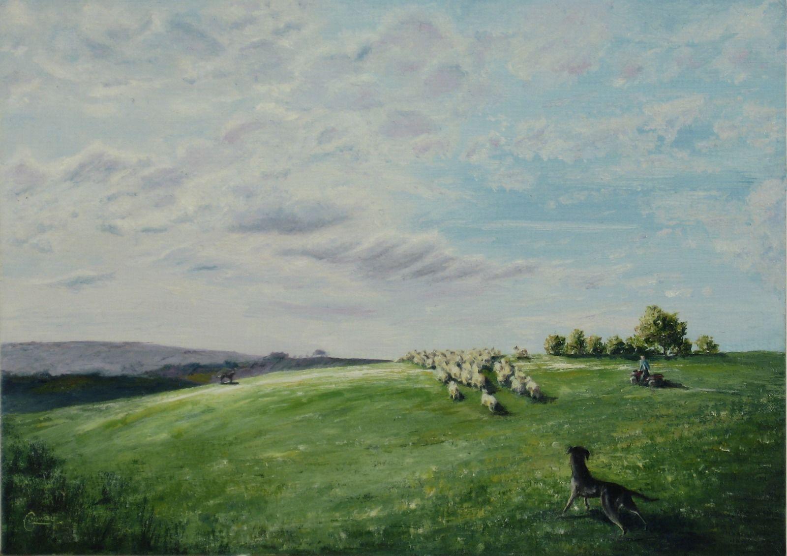 'Rounding with Huntaways'- Llansawel, Carmarthenshire