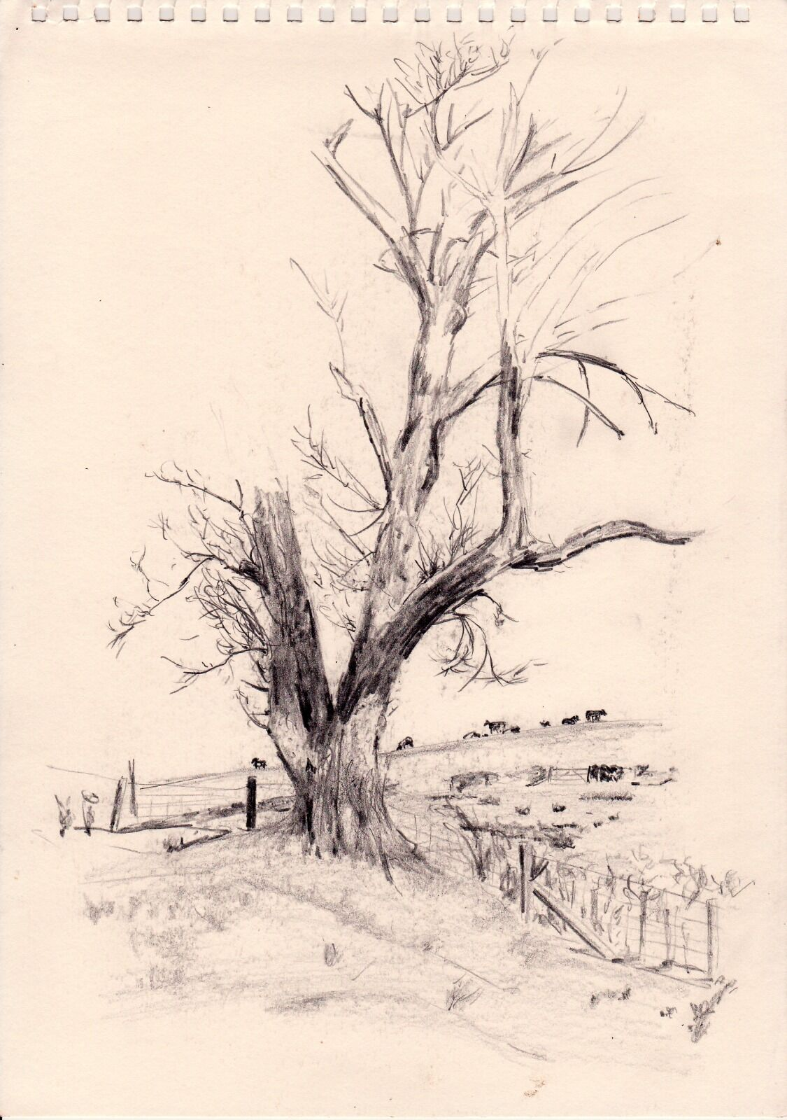 This unfinished sketch of a tree, which I ran out of time to complete, demonstrates how hard is is to capture the complex patterns in the things we take for granted around us.
