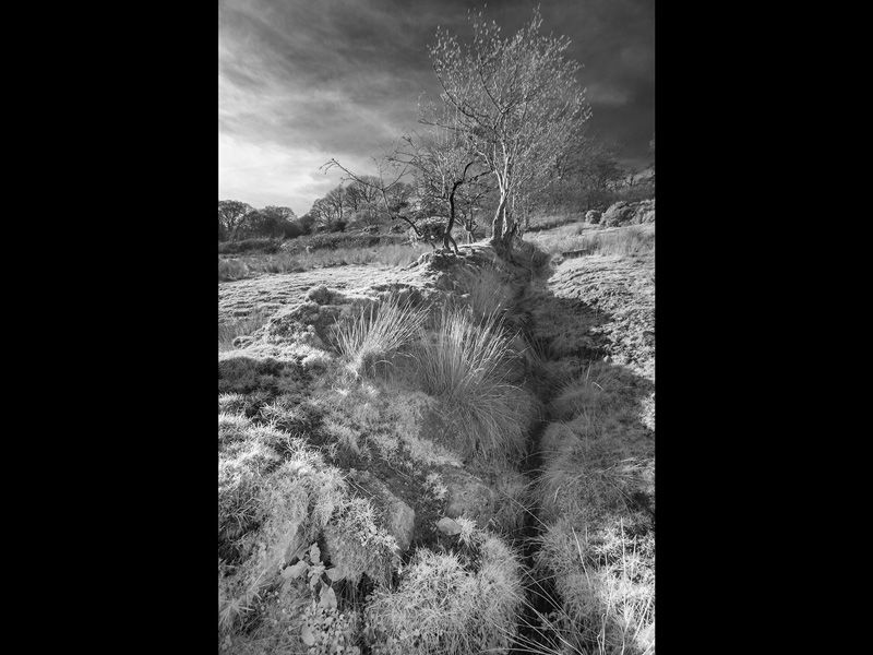 A Cumbrian Dyke by Graham Harcombe (18)