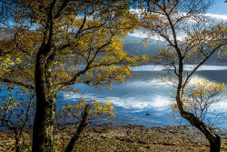 Autumn Gold by Alan Wilson [Commended]