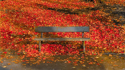 Autumn Seat by Brian Thompson - commended