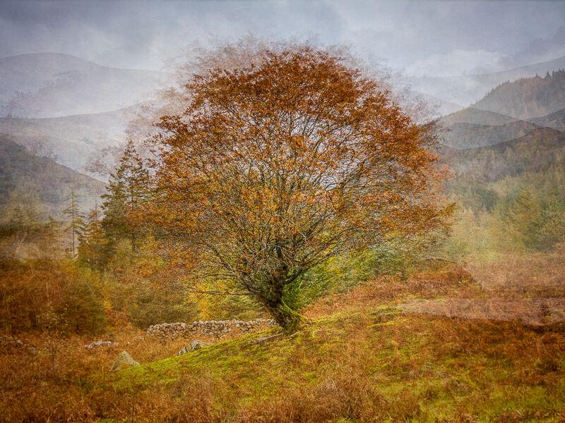 Autumn impressions Ade Gidney 18pts