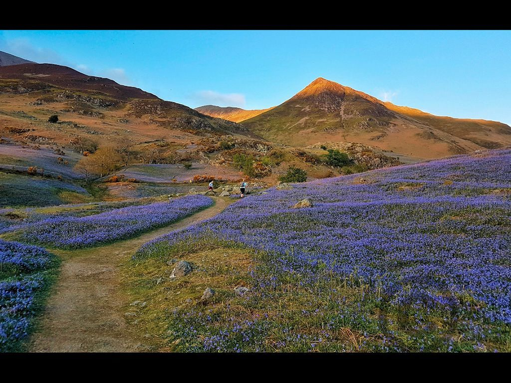 Bluebells by Ian Cutts - Commended