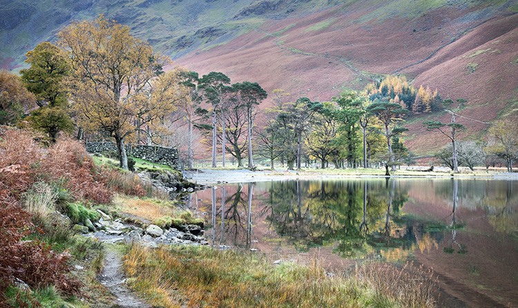 Buttermere Pines by David Price - Commended