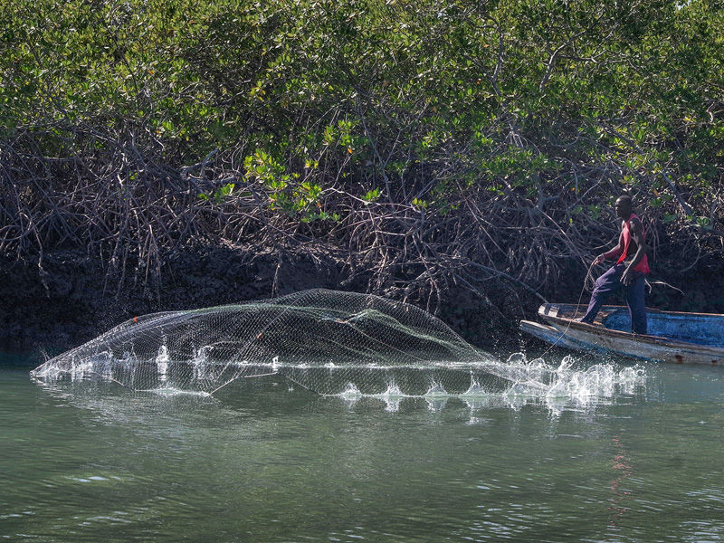 Casting the net by Graham Harcombe (18)