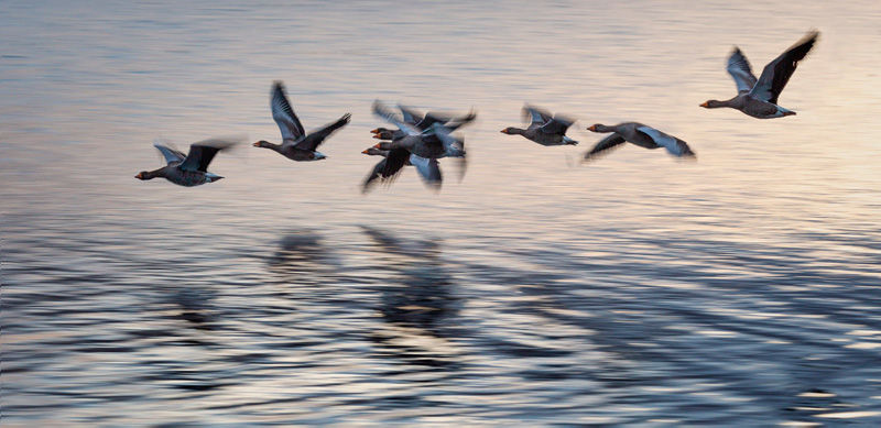 Flyby by Adrian Gidney - Highly Commended