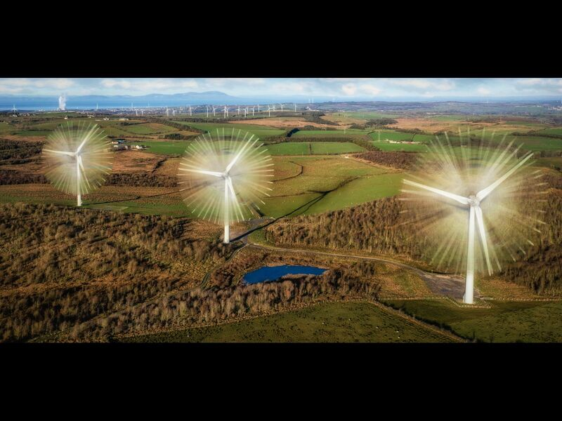 Gilgarran Daisy Turbines by Rob Duncalf - 1st Place