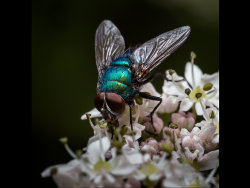 Greenbottle by Arian Gidney - Highly Commended