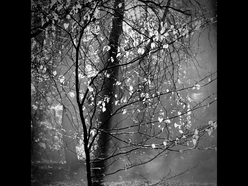 Morning Light by Linda Duncalf [18]