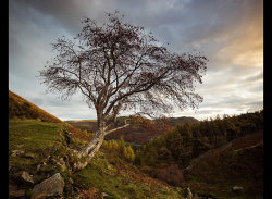 Rowan by Adrian Gidney - Highly Commended