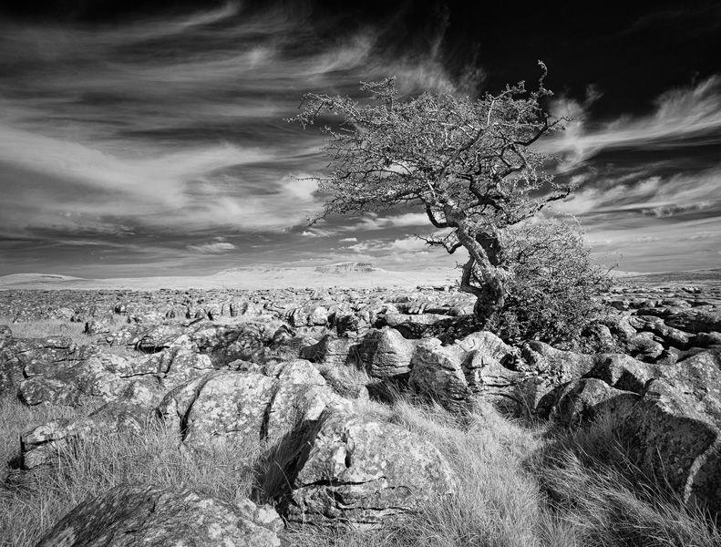 Struggling by Adrian Gidney 18