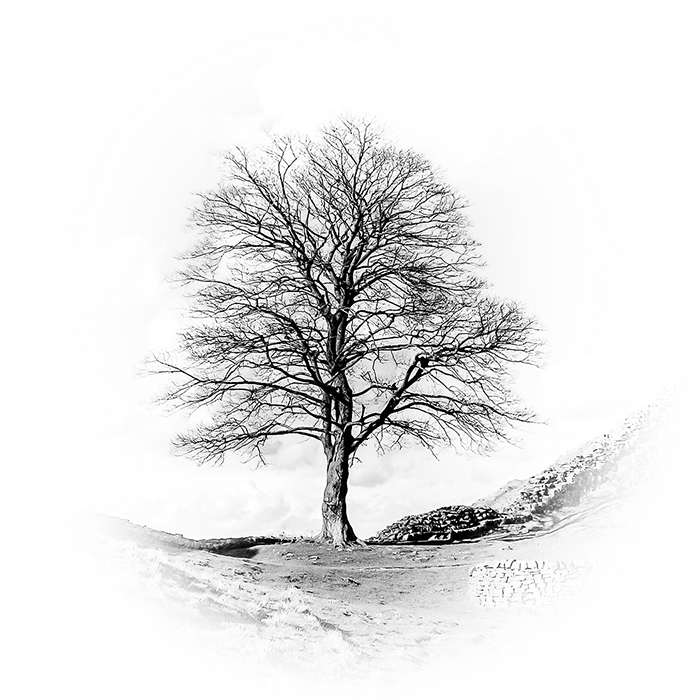 Sycamore Gap by Ann Healey • Commended