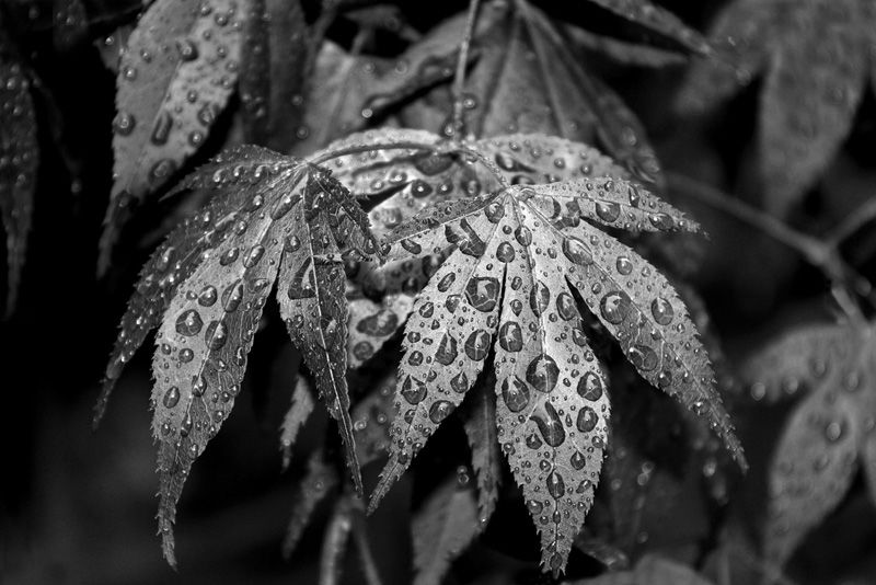 Wet Leaves by Mary Thompson - Commended