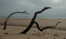Driftwood in the sand 01