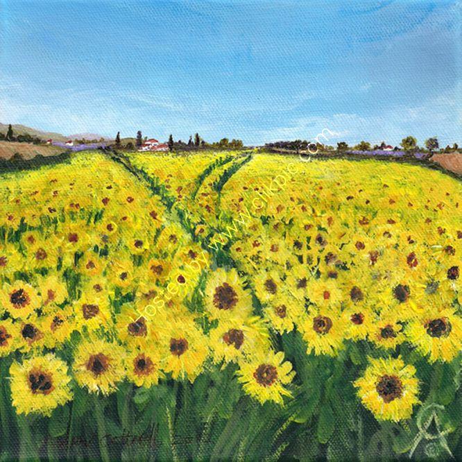 Fields of Sun