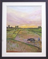 Ploughing Rice Paddy Fields