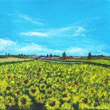 Sunny Meadows