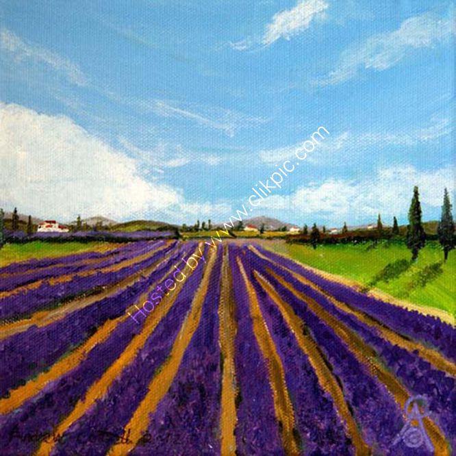 Tuscan Lavender Fields