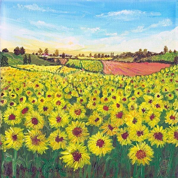 Sunflower Meadows