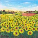 Sunflower Meadows