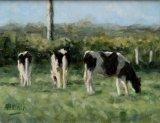 Cattle Morning Light