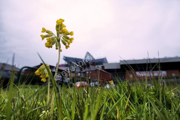 A stadium flourishing