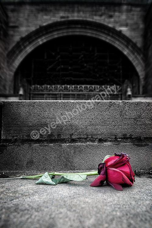 Lost Rose