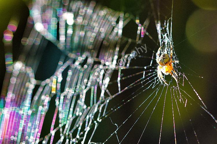 Web of colour